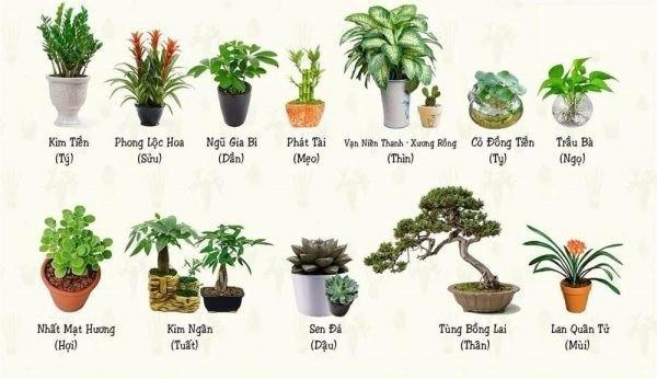 Một số loại cây cảnh