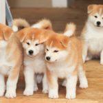 Phương pháp huấn luyện chó bị tăng động hiệu quả nhất