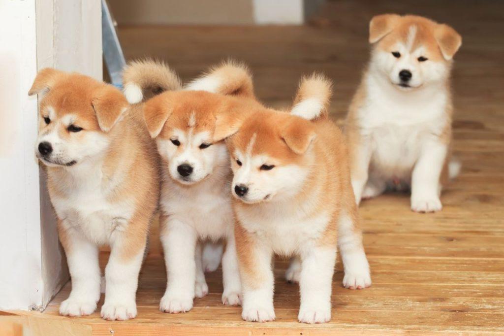 Phương pháp huấn luyện chó bị tăng động