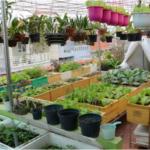 Các loại công cụ giúp trồng rau tại nhà trong không gian hẹp