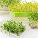 2 cách trồng rau mầm không cần dùng đất cực dễ ai cũng trồng được