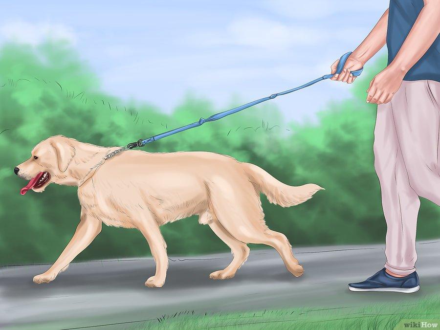 phương pháp huấn luyện chó tăng động 2
