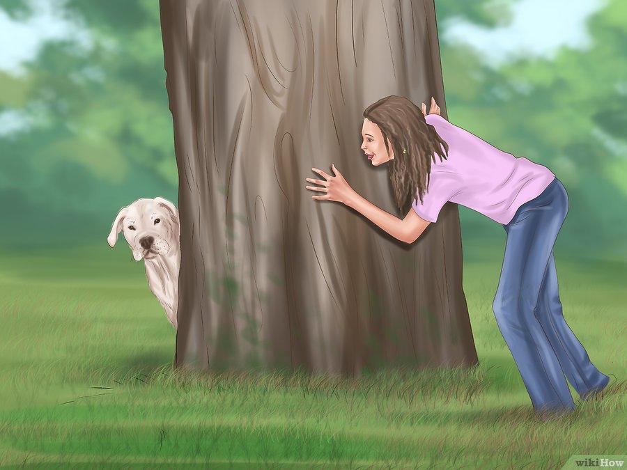 phương pháp huấn luyện chó tăng động 3