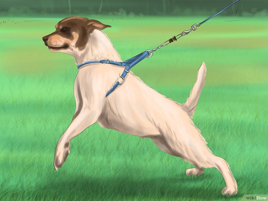 phương pháp huấn luyện chó tăng động