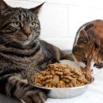 [Review] 5 nhãn hiệu thức ăn hạt khô cho mèo giá rẻ tốt nhất hiện nay