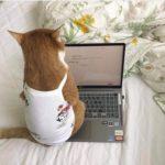 """Lợi ích của việc nuôi """"quàng thượng mèo"""" mà có thể bạn không ngờ tới"""