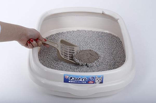 6 nhãn hiệu cát vệ sinh cho mèo giá rẻ, chất lượng tốt cho các Sen lựa chọn
