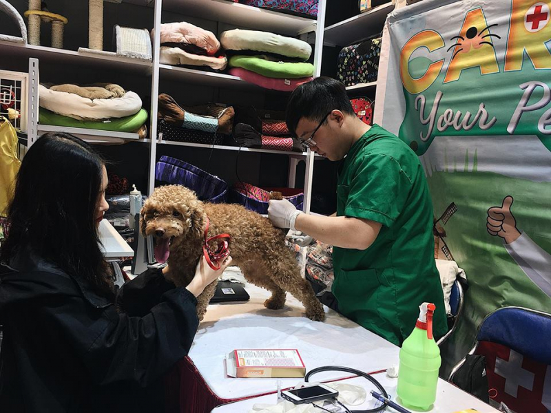 Dịch vụ Grooming & spa của PetCity