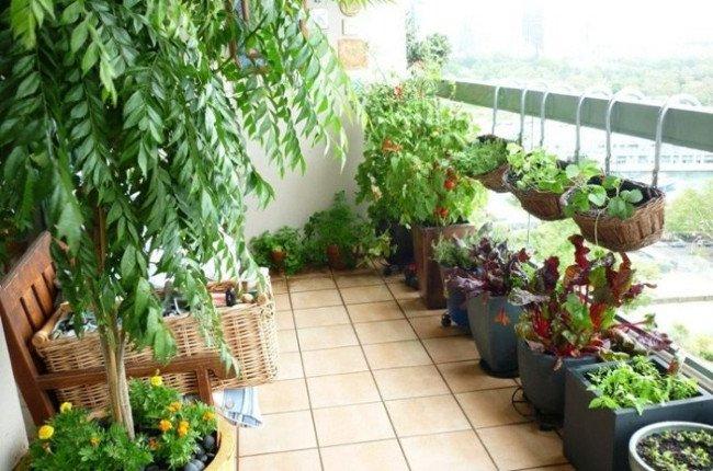 Biết 20 mẹo hữu ích này, khu vườn của bạn sẽ trở nên tươi tốt.