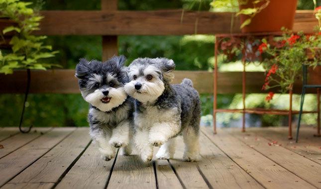 Những chú chó tri kỷ