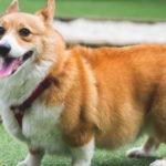 Nguyên nhân, cách chữa trị và phòng tránh chó đi ngoài ra máu