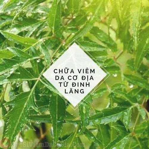 """Lá đinh lăng còn được gọi là """"cây nhân sâm dành cho người nghèo"""". Đây là loại lá rất phổ biến trong dân gian và có nhiều công dụng điều trị bệnh, trong đó có viêm da cơ địa"""