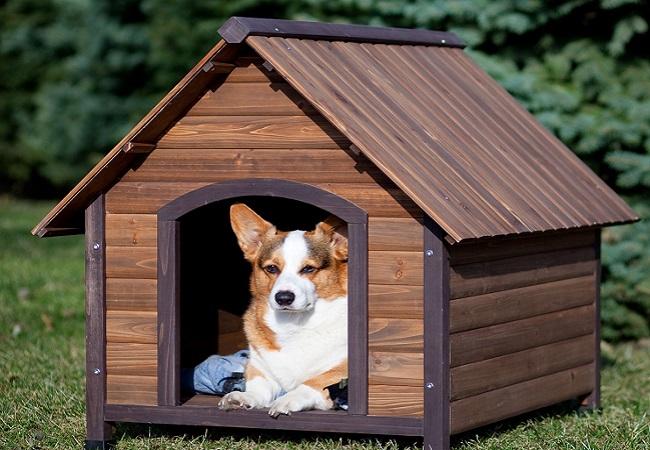 Cách dạy chó con làm quen khi về nhà mới