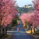 CHOÁNG NGỢP với những mùa hoa siêu đạp chỉ có tại Đà Lạt