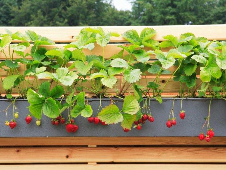 những vườn rau vừa sạch vừa ngon lành nằm ngay trong nhà bạn