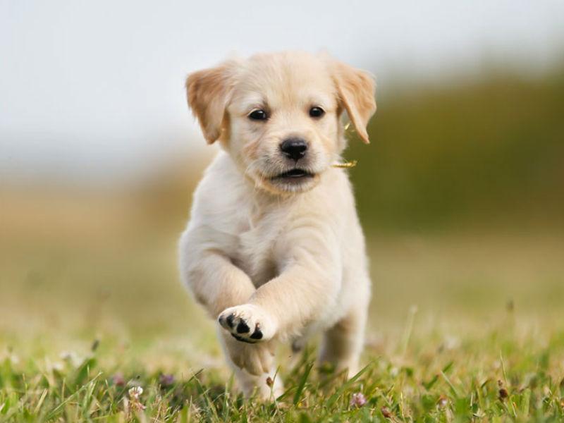 puppy boundaries header