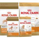 review lieu dong thuc an cho cho cao cap royal canin co tot nhu loi don 59529 1