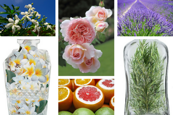 Nước hoa Charme Perfume vạn người say đắm. Top 09 loại nước hoa Charme bán chạy nhất 2019