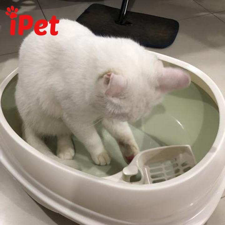 Review thương hiệu khay vệ sinh tốt nhất cho mèo