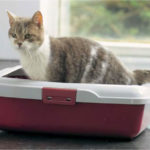 [Review] 3 thương hiệu khay vệ sinh tốt nhất cho mèo