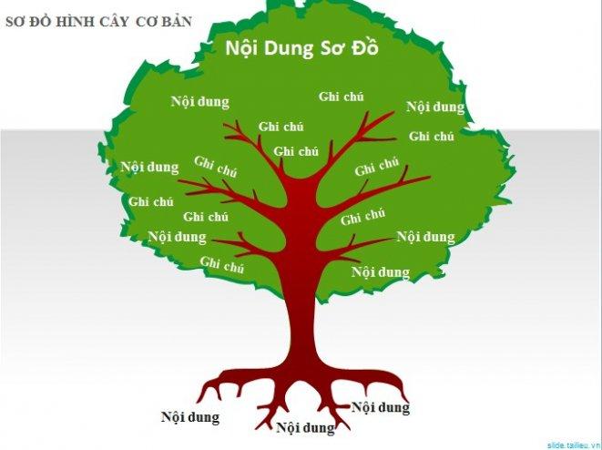 sơ đồ hình cây cơ bản
