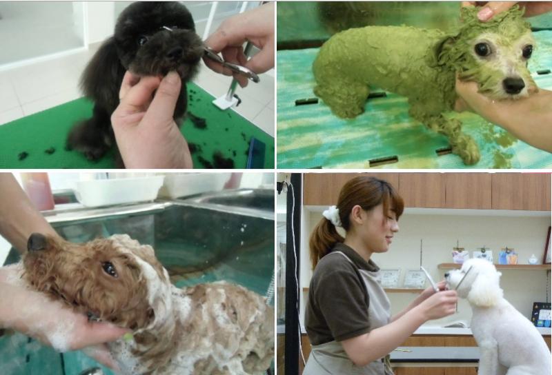 sasaki animal hospital