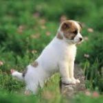 Top 4 loại gel dinh dưỡng cho chó được yêu thích nhất hiện nay