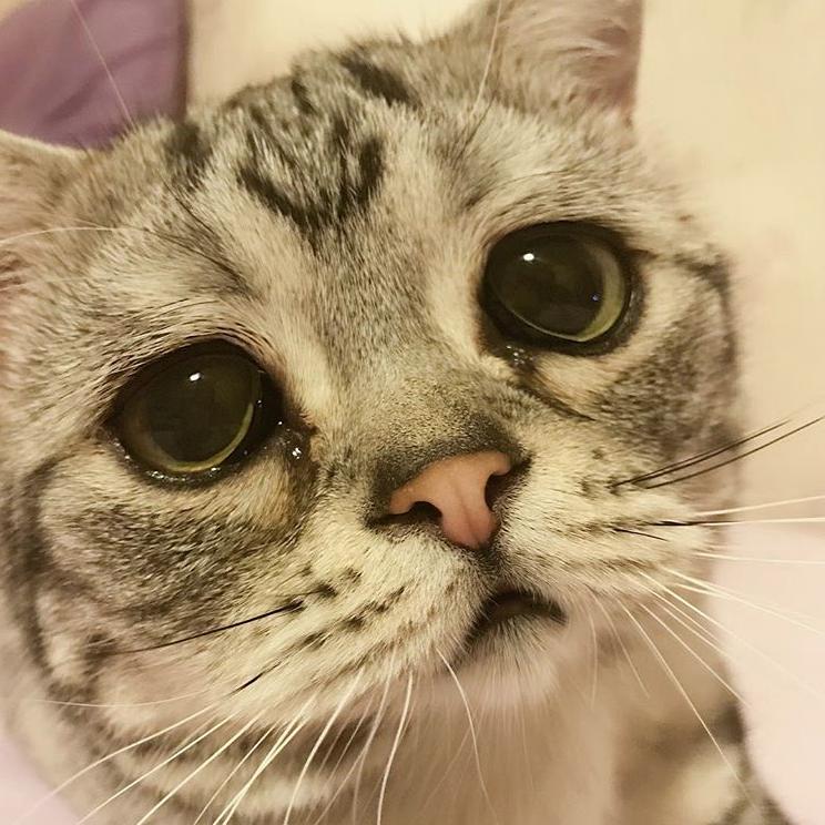 Tại sao mèo