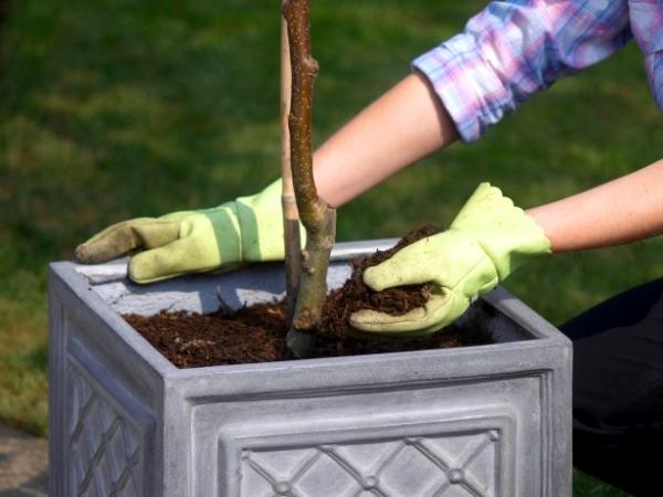 Trồng cây ăn trái làm giàu cây mít, cây sầu riêng