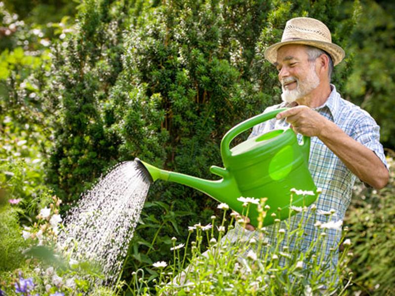 trồng rau tại nhà đơn giản 06