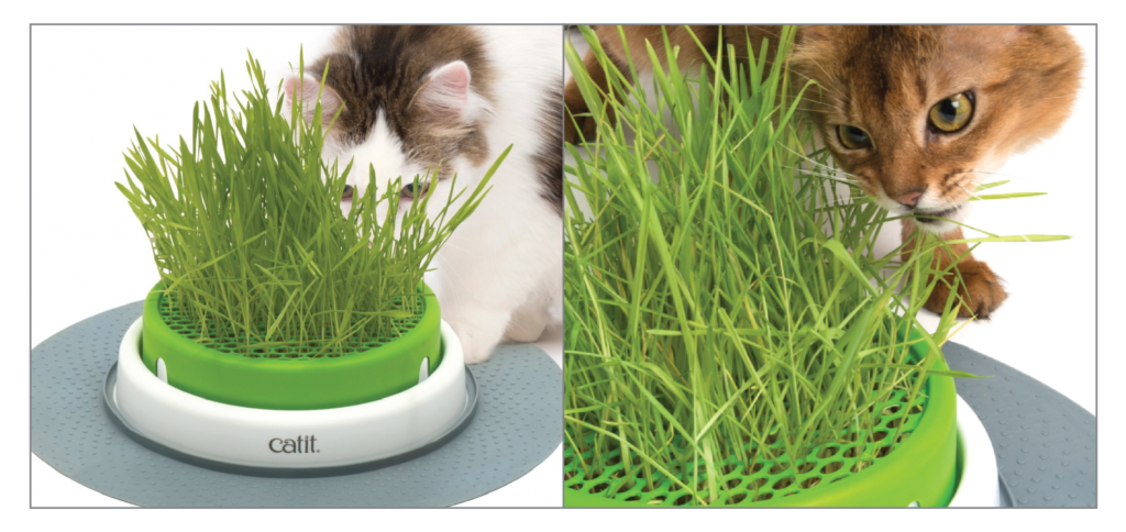 vì sao mèo ăn cỏ 03