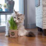 vì sao mèo ăn cỏ 05