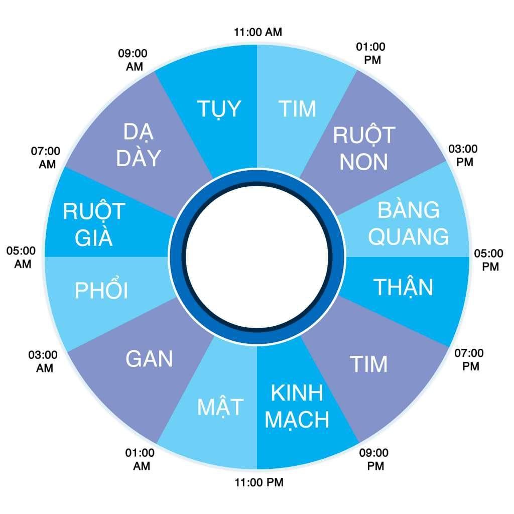 Đồng hồ sinh học 24h của cơ thể
