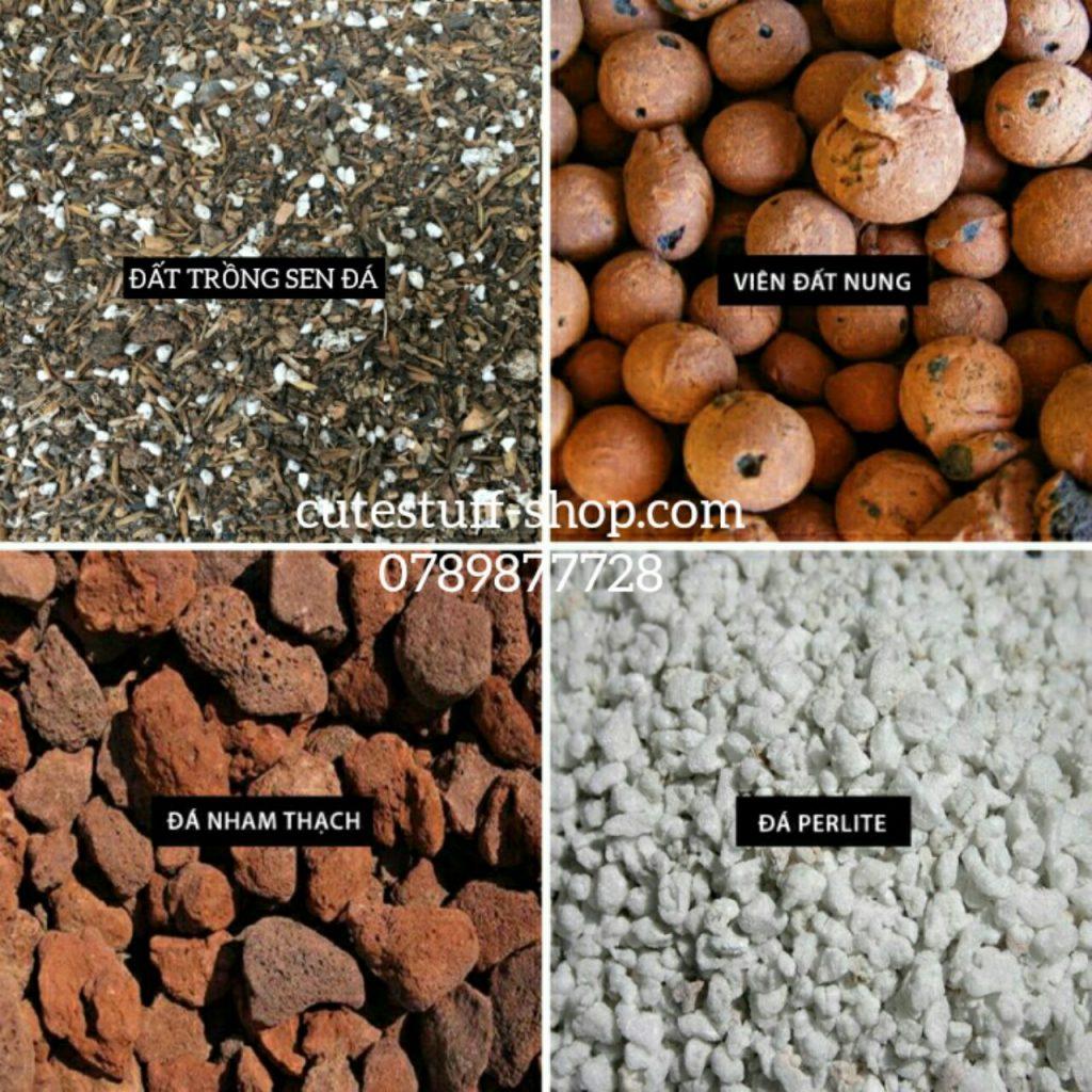 đất trồng sen đá