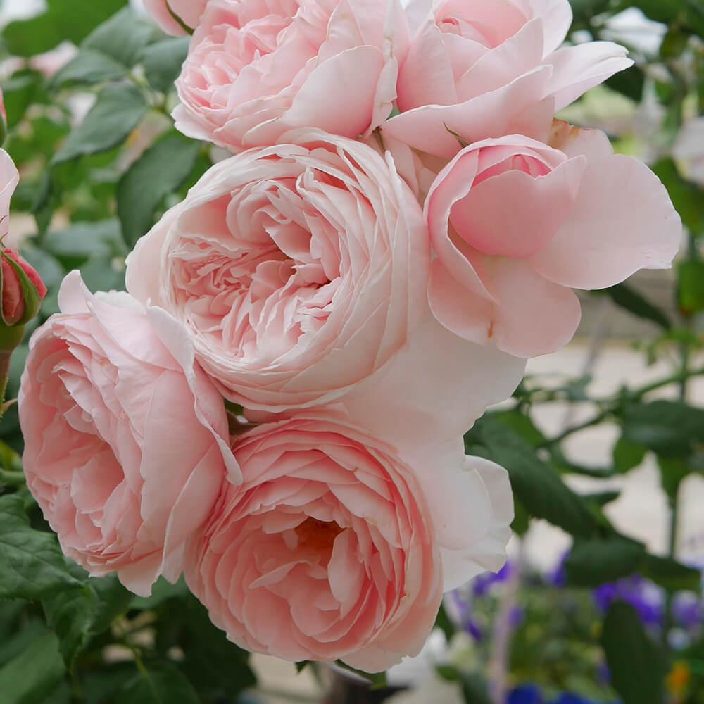 """Cách cắm hoa đơn giản nhưng đẹp """"mê hồn"""""""