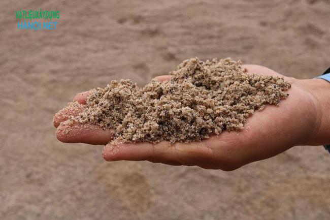 Chọn cát sạch để trồng