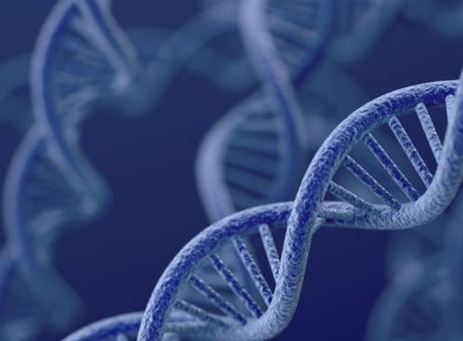 Béo phì do di truyền ở một số đoạn gen