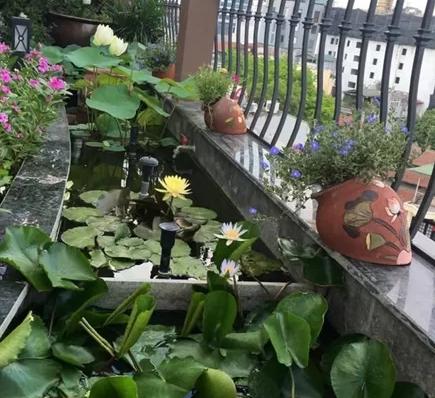 Kết hợp hài hòa giữa các loài hoa