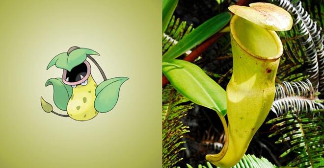Tạo hình Pokemon từ cây nắp ấm