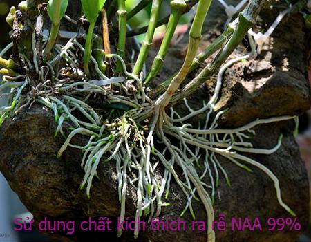 THuốc kích rễ NAA 99% cho Lan