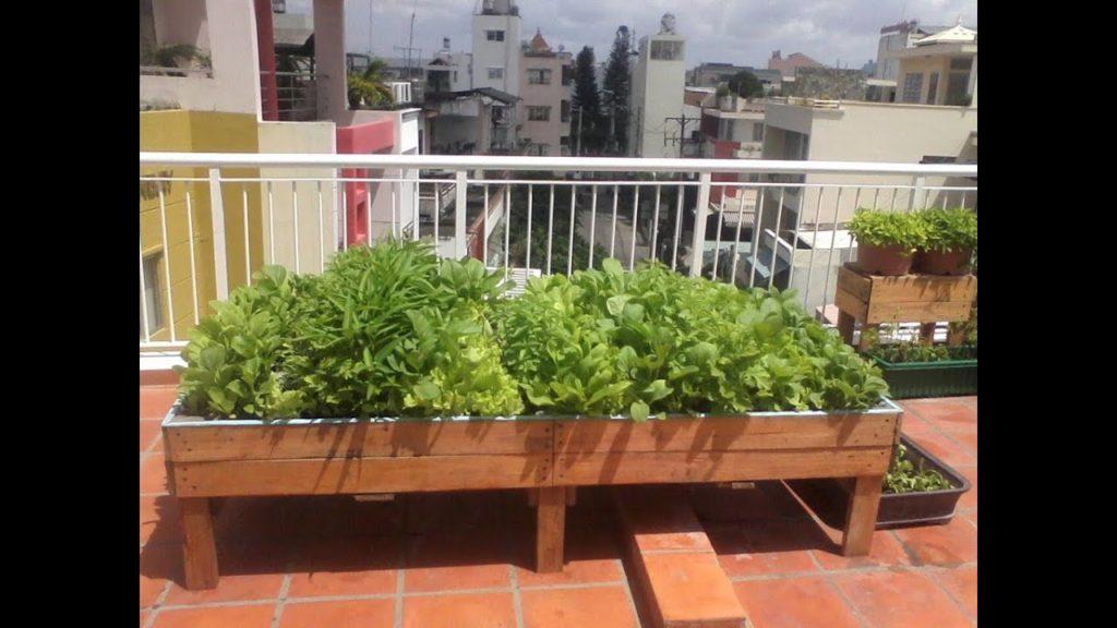 Cách trồng rau xanh, sạch nơi đô thị