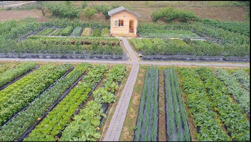 Nông nghiệp hữu cơ trang trại JADAM 1