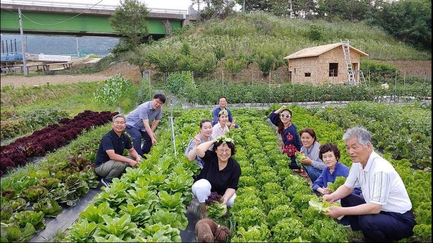Nông nghiệp hữu cơ trang trại JADAM 2