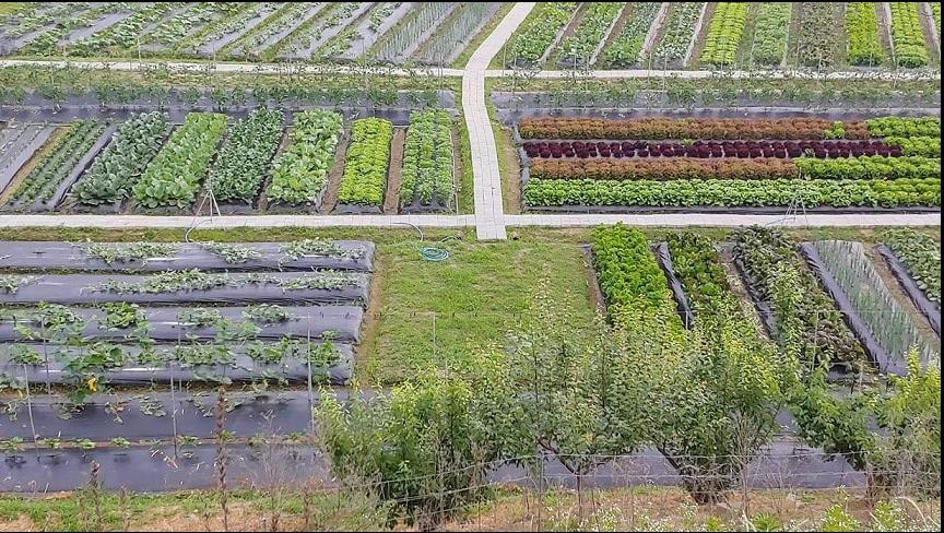 Nông nghiệp hữu cơ trang trại JADAM 3