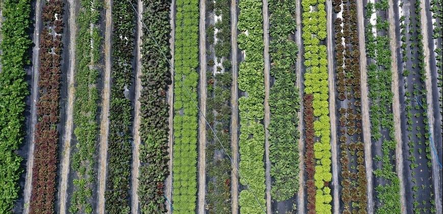 Nông nghiệp hữu cơ trang trại JADAM 7