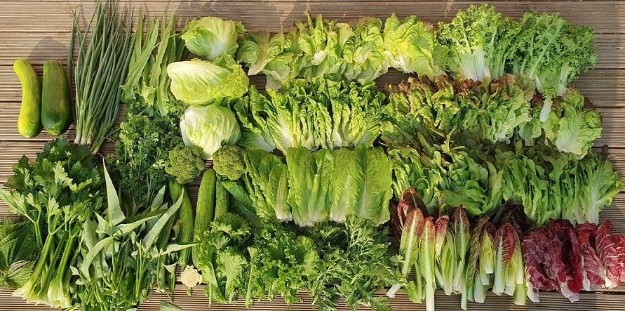 Nông nghiệp hữu cơ trang trại JADAM 8