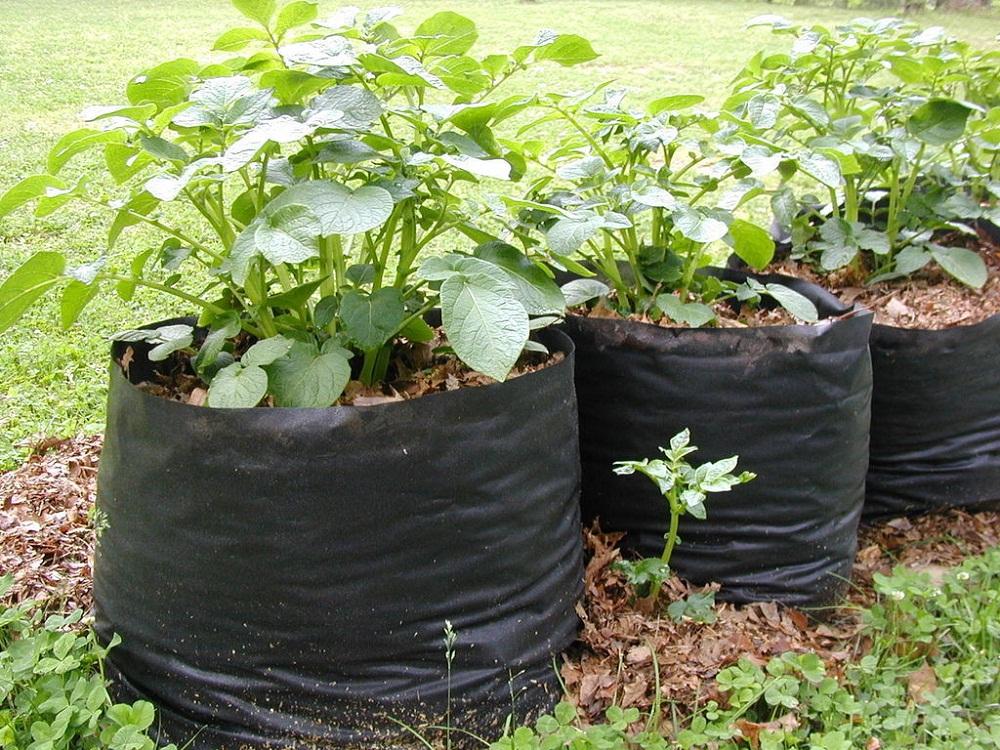 Tận dụng những túi nilon cũ để trồng rau