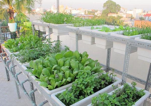 Kệ trồng rau giúp tiết kiệm diện tích sân thượng