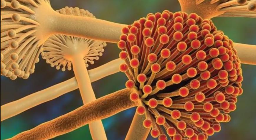 độc tố aflatoxin có thể gây ung thu gan