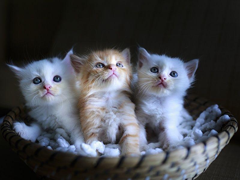 Cho các bé mèo làm quen với nhau